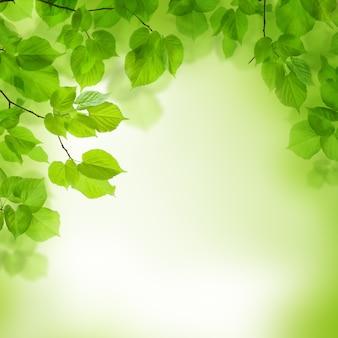 Grüne blätter grenze, abstrakter hintergrund