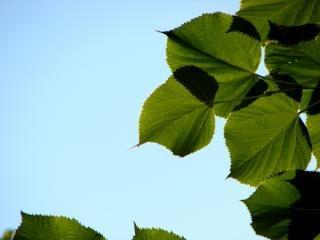 Grüne blätter, leben