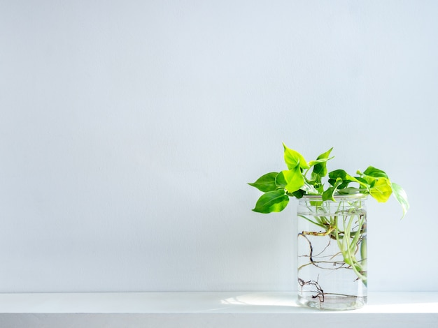 Grüne blätter mit wasser in transparentem plastikglas.