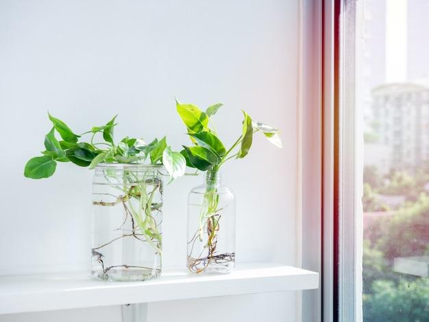 Grüne blätter mit wasser in transparenten plastikflaschen.