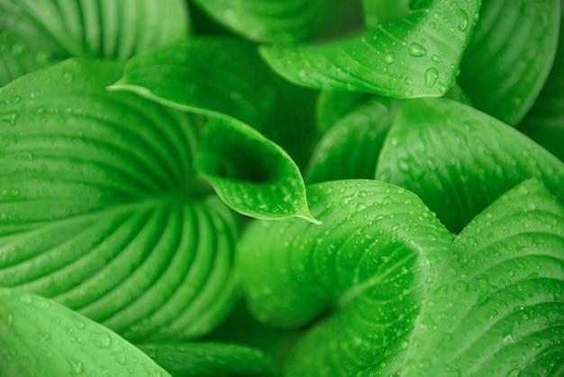 Grüne blätter mit wassertropfen vom regen hautnah