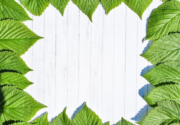 Grüne blätter rahmen lokalisiert auf weißem holzhintergrund.