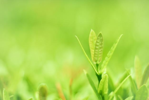 Grüne blätter, schöne natur wächst.