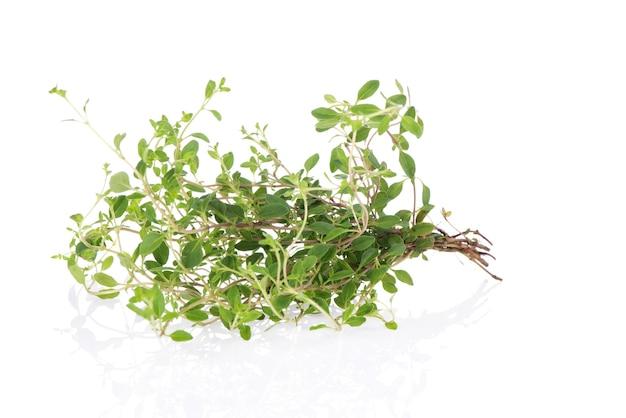 Grüne blätter und bäume des thymianzweigs lokalisiert auf weißem hintergrund.
