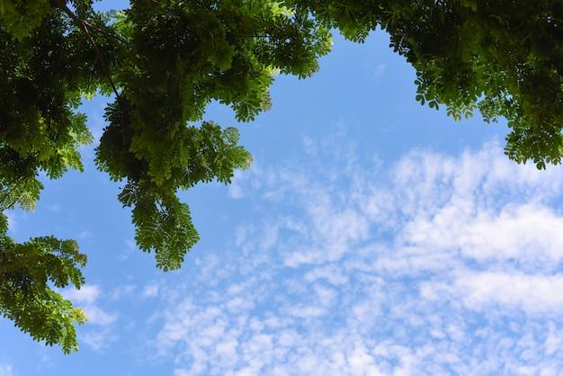 Grüne blätter und blauer himmel mit sonnenlicht in der sommersaison. blick auf die baumkrone einer riesigen platane an einem blauen sonnigen tag.