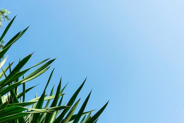 Grüne blätter und blauer himmel