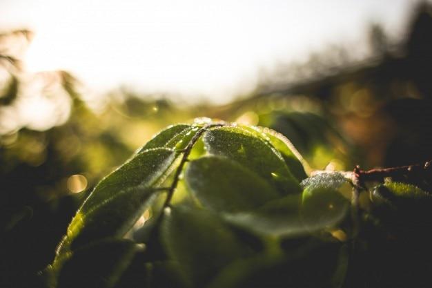 Grüne blätter und morgentau