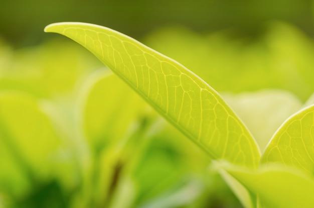 Grüne blätter, unscharfe gemusterte hintergründe