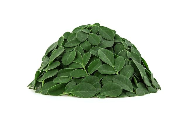 Grüne blätter von moringa lokalisiert auf weißem hintergrund mit beschneidungspfad.