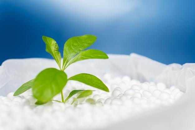 Grüne blätterpflanze, die auf polystyrolschaumperle in plastiktüte mit leuchtend blauem, umweltfreundlichem konzept wächst