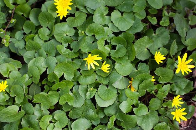Grüne blätterwand. texturwand für design grünes gras und blätter. naturmauer. tropische pflanze, umwelt, fotokonzept natur und pflanze. flach liegen. naturkonzept.