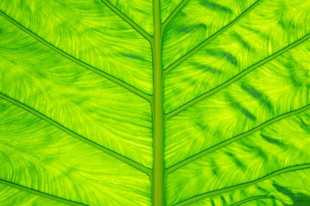 Grüne blatt textur Premium Fotos