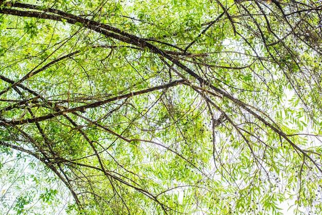 Grüne blattbeschaffenheit. blatt textur hintergrund