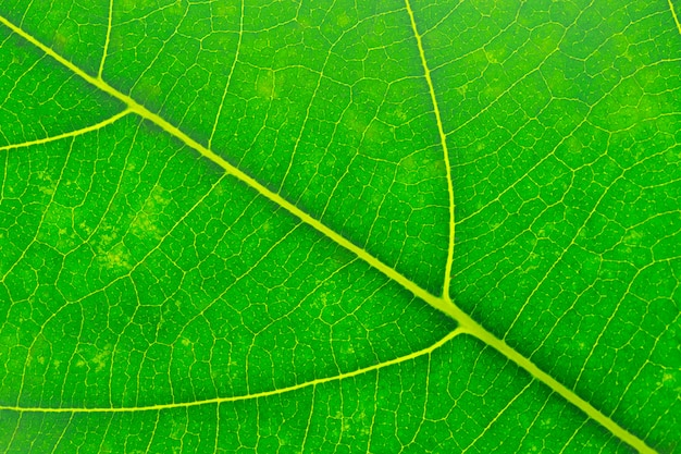 Grüne blattbeschaffenheit der nahaufnahme, makro