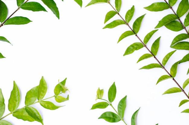 Grüne blattbeschaffenheit. draufsicht des blattbeschaffenheitshintergrundes