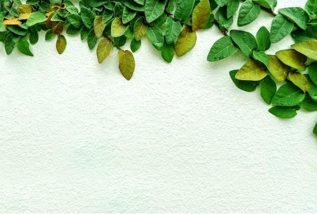 Grüne blattgrenze, isolat der anlage auf der wand im garten