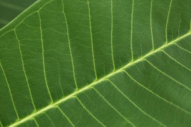 Grüne blattnahaufnahmebeschaffenheit für naturhintergrund