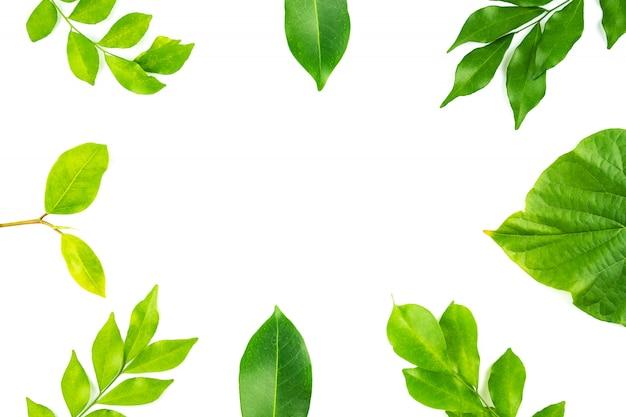 Grüne blattnatur lokalisiert auf weißem hintergrund