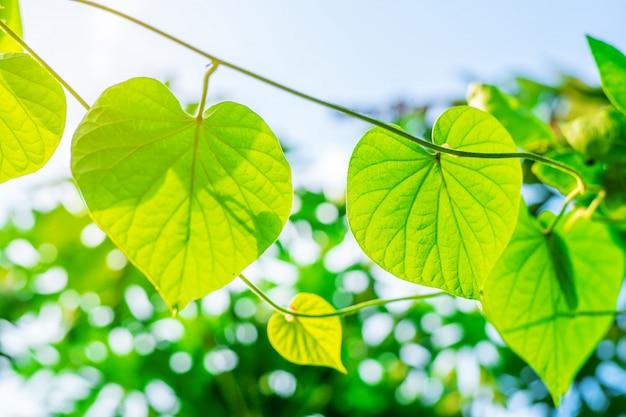 Grüne blattnatur mit niederlassung auf heller bokeh natur