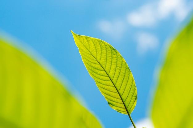 Grüne blattnatur mit niederlassung auf natur des blauen himmels