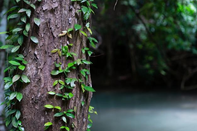 Grüne blattrebe der nahaufnahme auf baum im tropischen wald