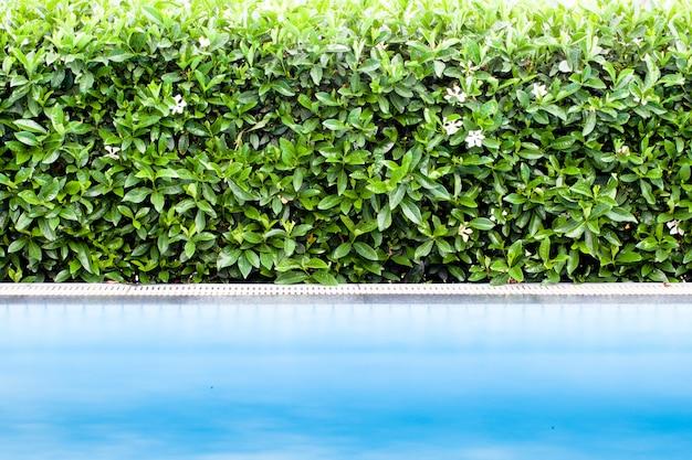 Grüne blattwand mit schwimmbad
