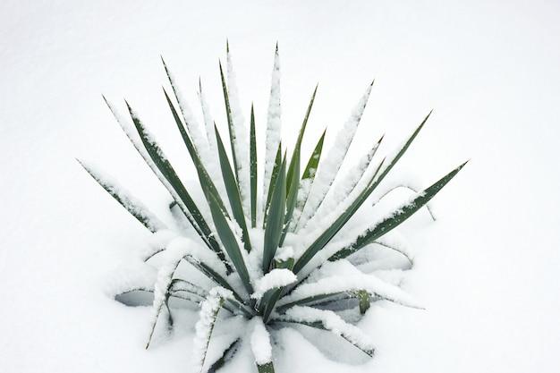 Grüne blume bush unter schnee
