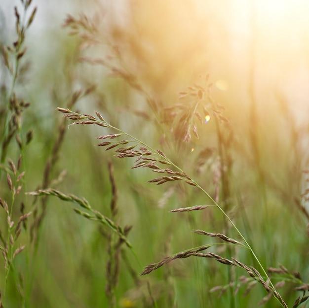 Grüne blumenanlage in der natur im sommer