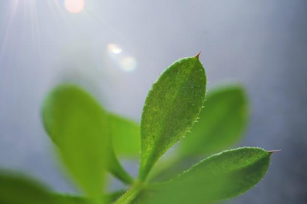 Grüne blumenpflanze im garten in der natur