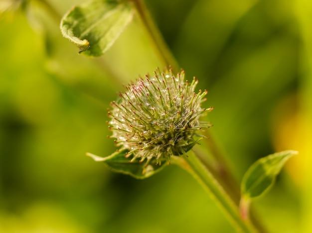 Grüne dornendistel mit spinnweben