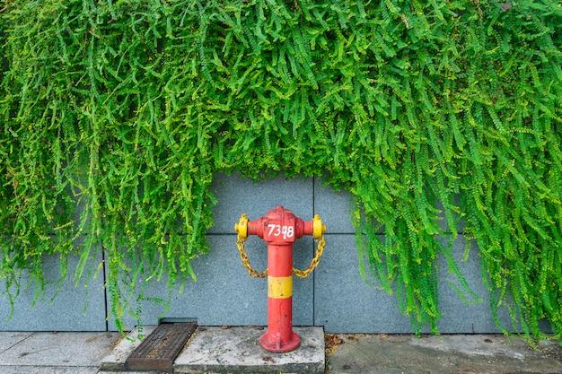 Grüne efeu-pflanzenwand