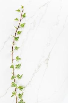 Grüne efeublätter auf weißem marmorhintergrund. natürliche kulisse. flach liegen. speicherplatz kopieren