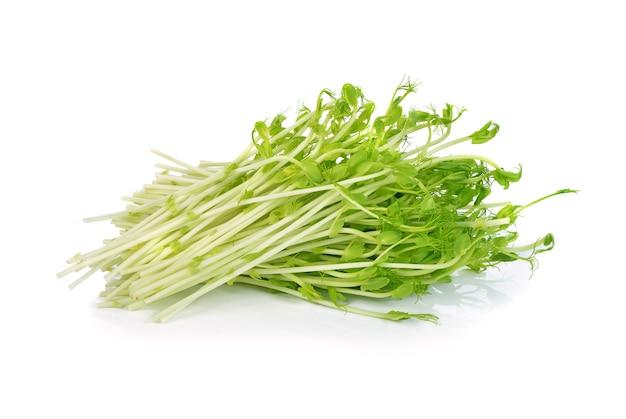 Grüne erbsensprossen lokalisiert auf weiß