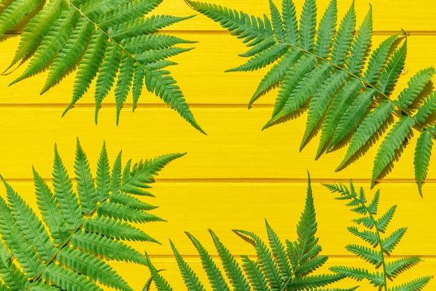 Grüne farbe des thailändischen farns tropische betriebsauf gelber hölzerner beschaffenheit