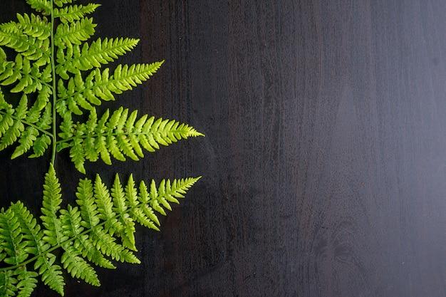 Grüne farnblätter auf grauem hintergrund mit kopienraum. foto in hoher qualität