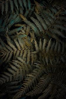 Grüne farnblätter gemasert im garten in der natur