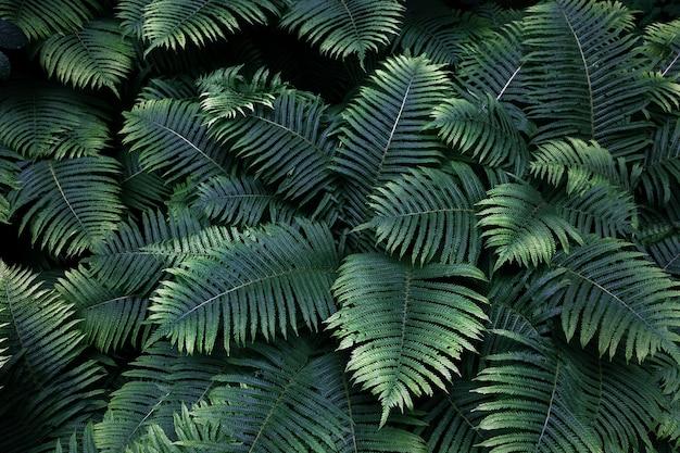 Grüne farnblätter mit regentropfen in tropischen. draufsicht. flach liegen. naturhintergrund, nahaufnahme von blättern von maiglöckchen und farn.