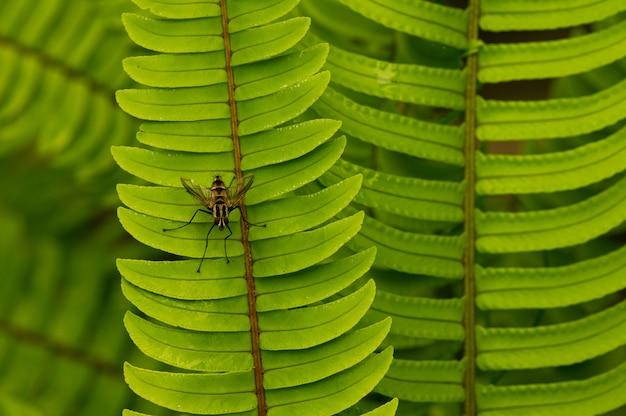 Grüne farnblätter und eine wilde fliege.