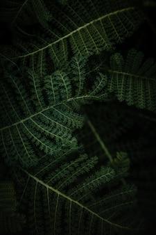 Grüne farnpflanze in nahaufnahme