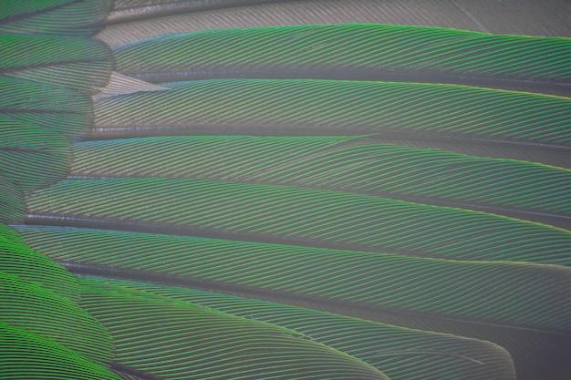Grüne feder textur hintergrund