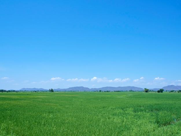 Grüne feldansicht mit himmel mit hellen wolken schöne naturlandschaft
