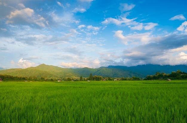 Grüne felder in der regenzeit und blauer himmel schöne naturlandschaft