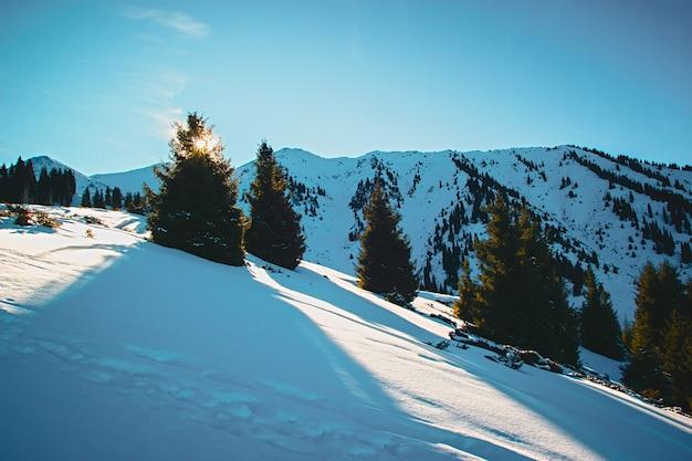 Grüne fichte vor dem hintergrund der schneebedeckten berge großer schatten im klaren himmel der kamera