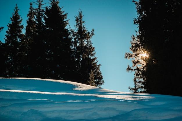 Grüne fichte vor dem hintergrund des sonnenaufgangs der schneebedeckten berge großer schatten im klaren himmel der kamera