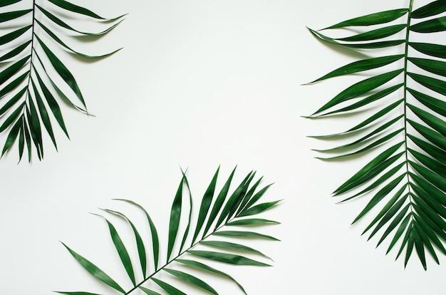 Grüne flache lag tropische palmblattzweige auf weißem hintergrund. platz für text, kopie, schriftzug.