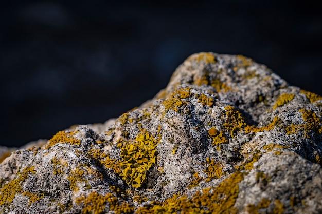 Grüne flechte auf den steinen