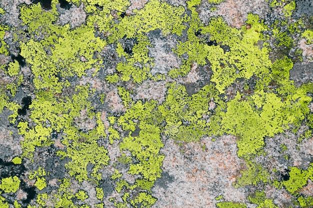 Grüne flechten textrure auf grauem stein