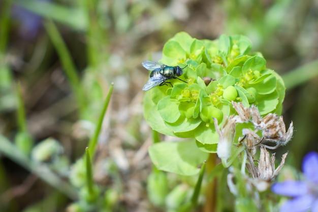 Grüne fliege auf grünem blatt