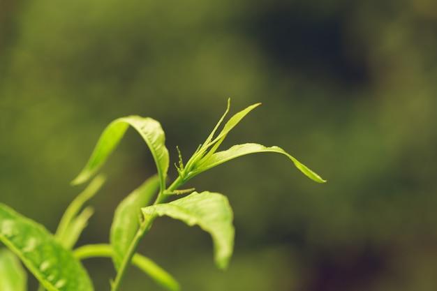 Grüne frische betriebsgrasnahaufnahme