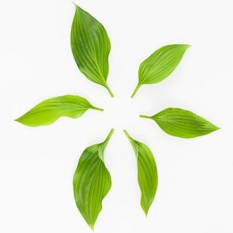 Grüne frische blätter vereinbarten im kreis auf weißem hintergrund